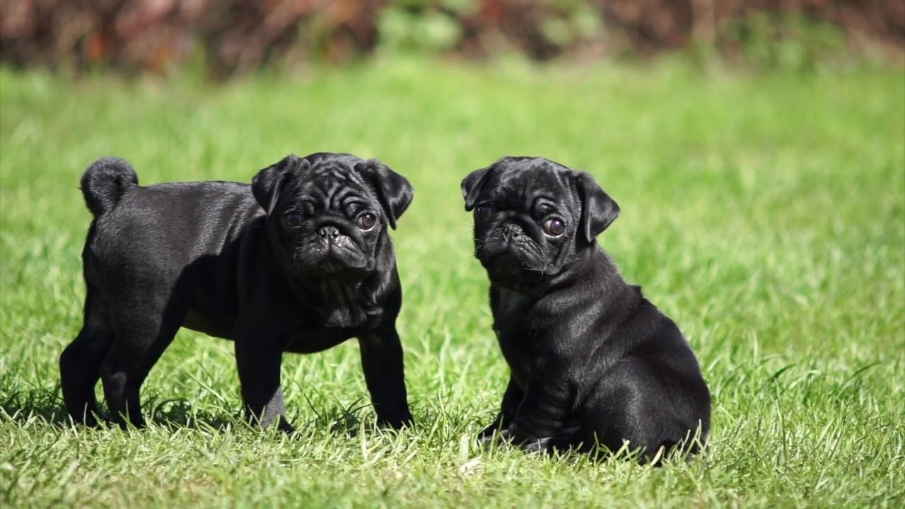 Общительные, добродушные и не агрессивные: идеальные собаки для семей с детьми